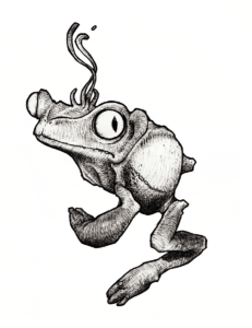 "Drawing by Teddy Ros ""Kambo"" 2008 black pen on paper 12 x 12 cm representing the frog phyllomedusa bicolor"