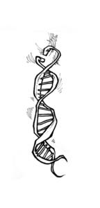 """dessin """"serpentadn"""" 2007 stylo noir sur papier 5 x 3 cm de Teddy Ros représentant le serpent ADN enrouler sur lui même"""