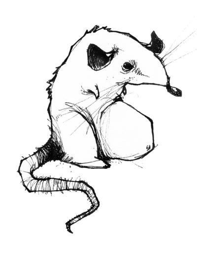 """Dessin """"sourix2"""" 2005 stylo noir sur papier 15 x 15 cm de Teddy Ros représentant un rat"""