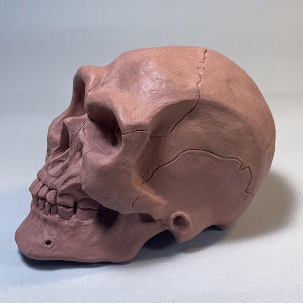 """Photo de la sculpture """"Crâne"""" 2019 version original sculpter en plasitiline, réaliser par l'artiste Teddy Ros"""